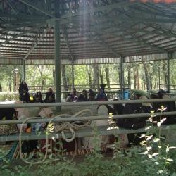 برگزاری اردوی تفریحی  تشکیلاتی دانش آموزان دختر متوسطه اول